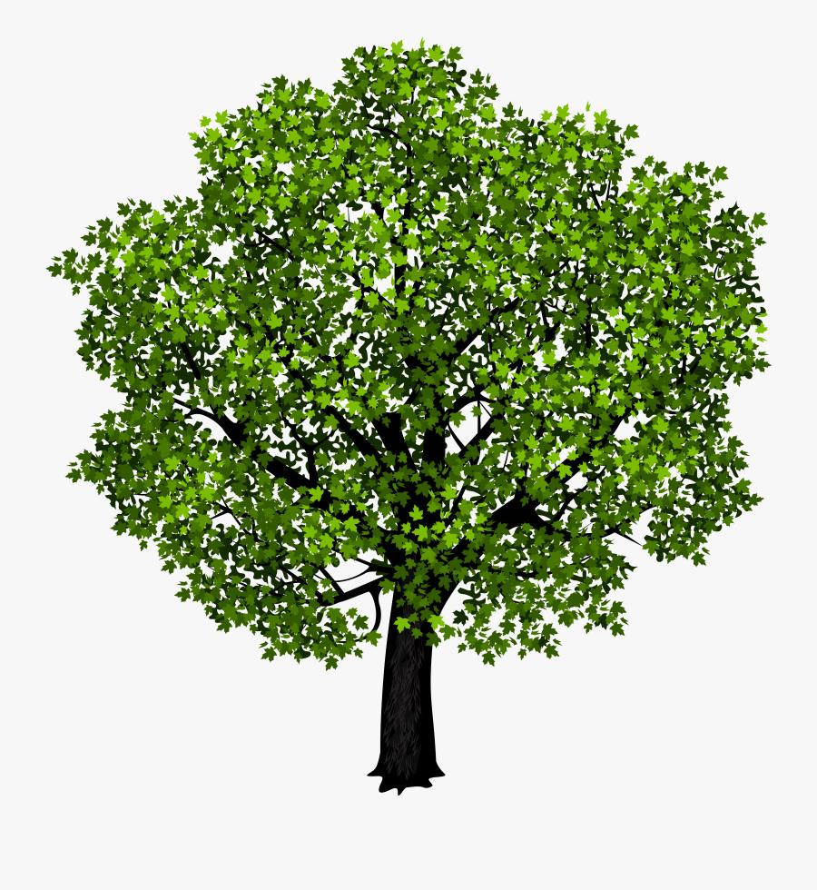 Transparent Maple Leaf Clipart - Maple Tree Transparent Background, Transparent Clipart