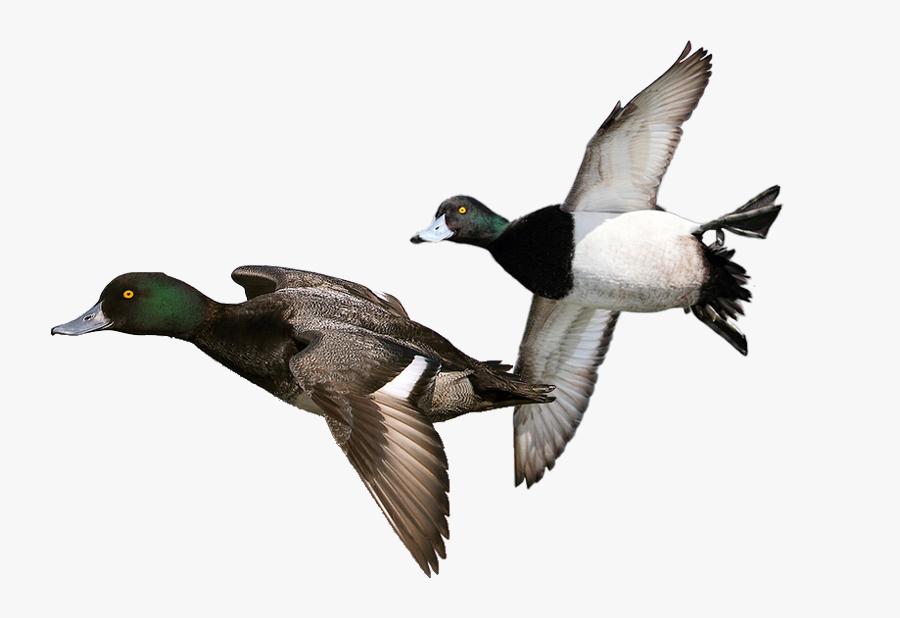 Duck Hunt Duck Png - Diver Duck, Transparent Clipart