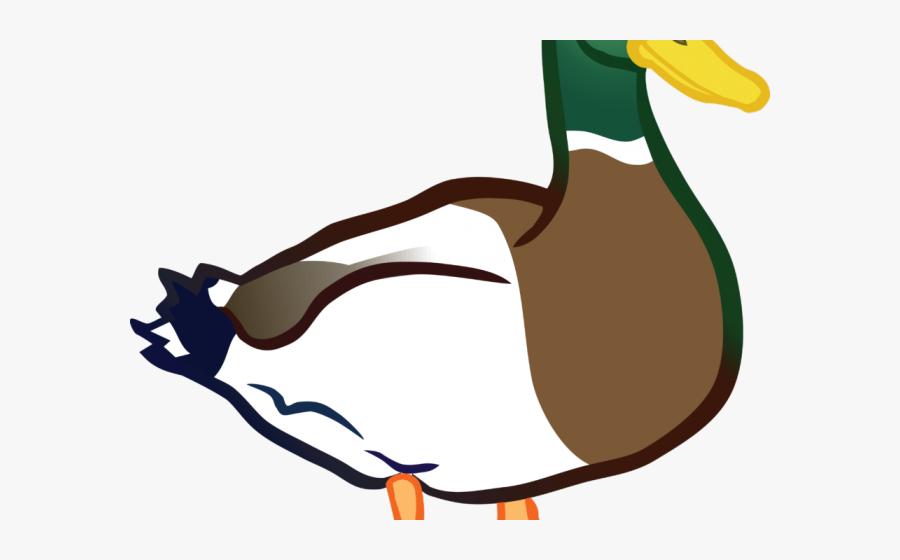 Duck Clipart, Transparent Clipart