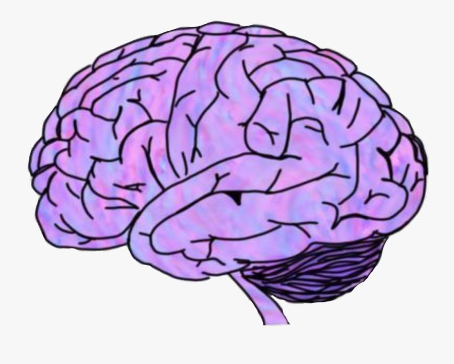 #brain #scary #crippy #mozak #purple #pink #organ #head - Brain Png, Transparent Clipart