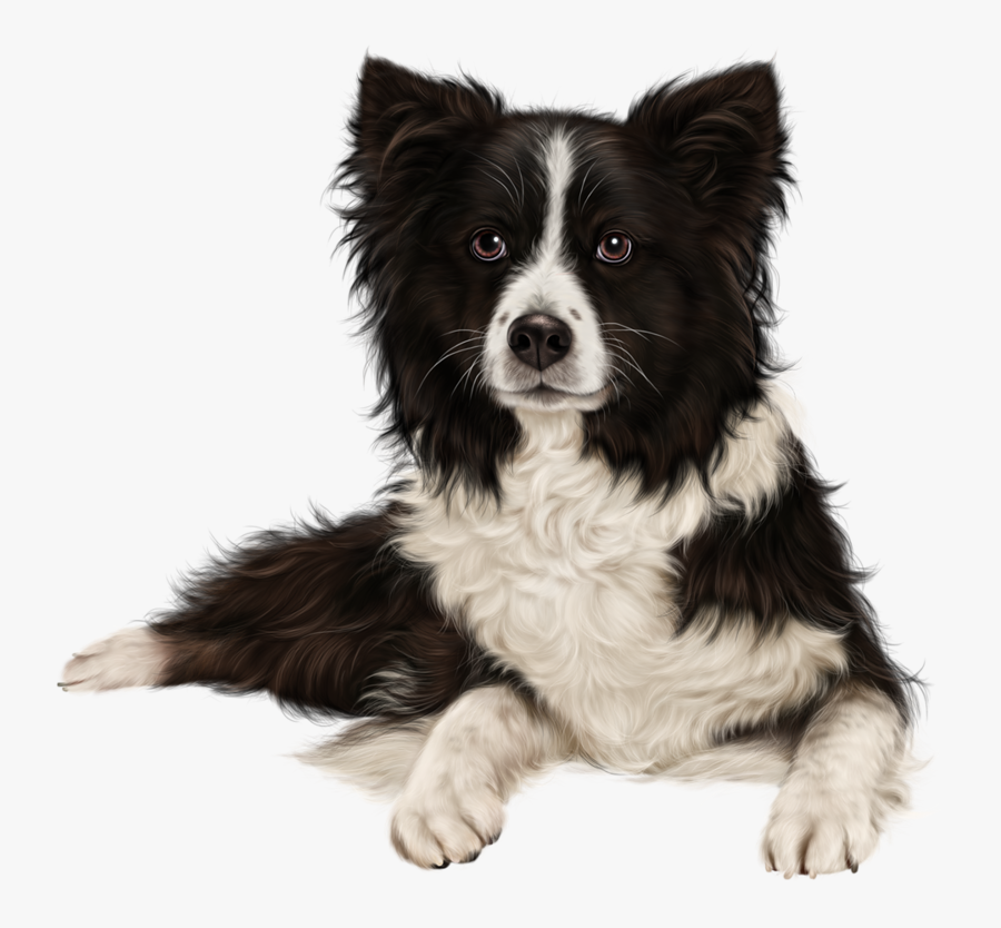 Rough Collie Border Collie Puppy Sheltie Australian - Border Collie Png, Transparent Clipart