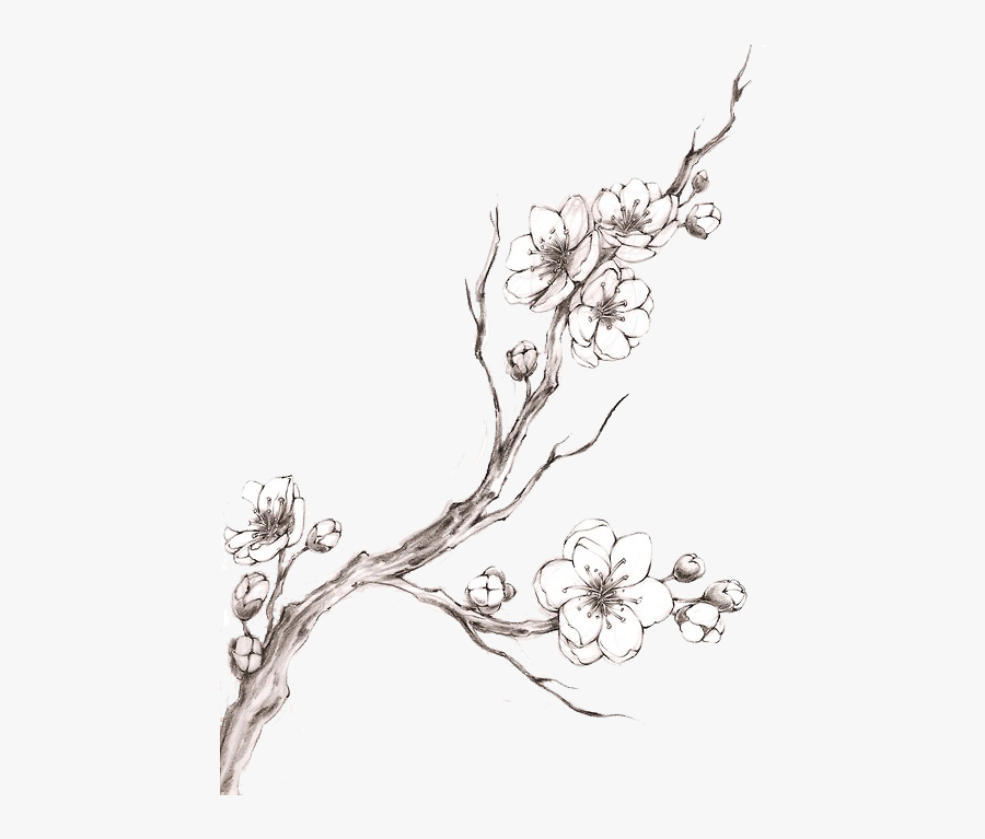 Clip Art How To Draw A Cherry Blossom - Drawing Cherry Blossom Branch, Transparent Clipart