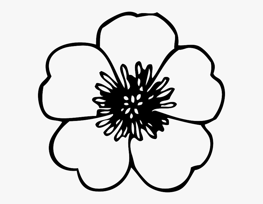 Outline Clipart Cherry - Poppy Flower Colouring Pages, Transparent Clipart