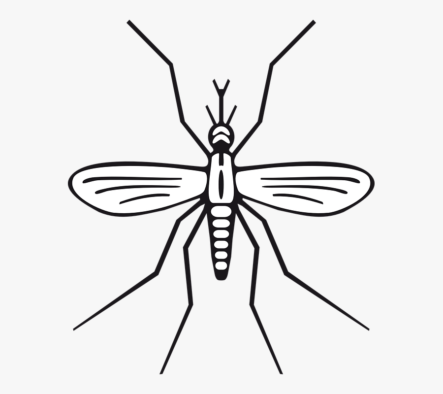 Transparent Mosquito Png - Easy To Draw Mosquito, Transparent Clipart