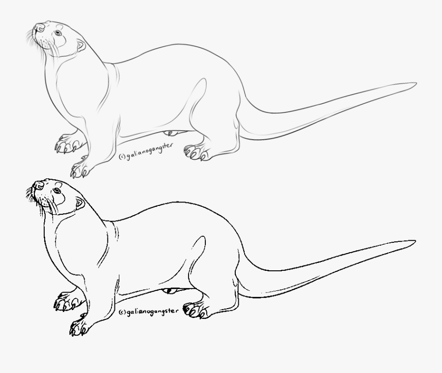 Otters Drawing Free Download On Unixtitan - Free Otter Lineart, Transparent Clipart