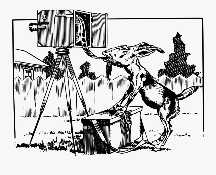 Art,monochrome Photography,carnivoran - Photographic Film, Transparent Clipart
