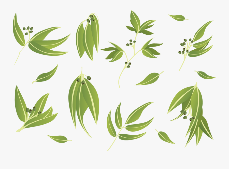 Gum Trees Leaf Euclidean Vector - Gum Trees , Free ... (900 x 664 Pixel)