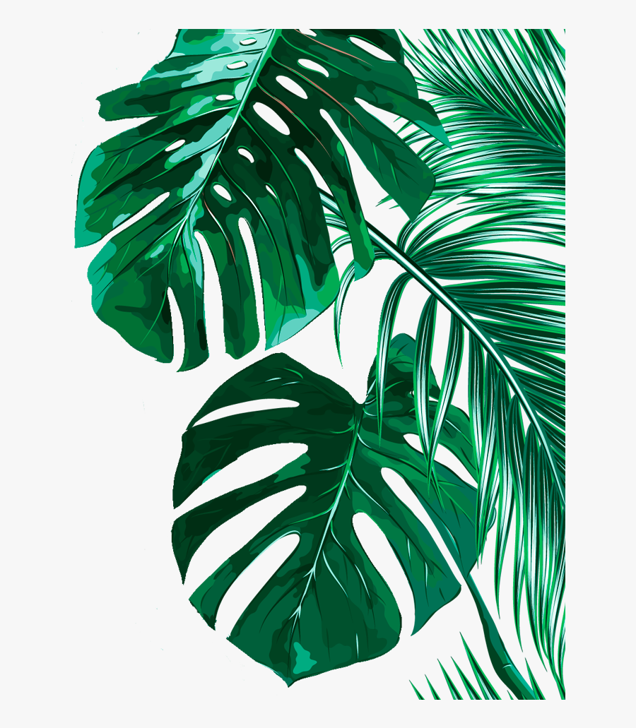 High Resolution Tropical Leaves Free Transparent Clipart Clipartkey Watercolor seamless background with tropical leaves. high resolution tropical leaves free