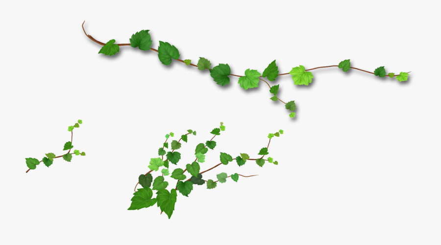 Branch Leaf Tree - Realistic Green Leaves Png, Transparent Clipart