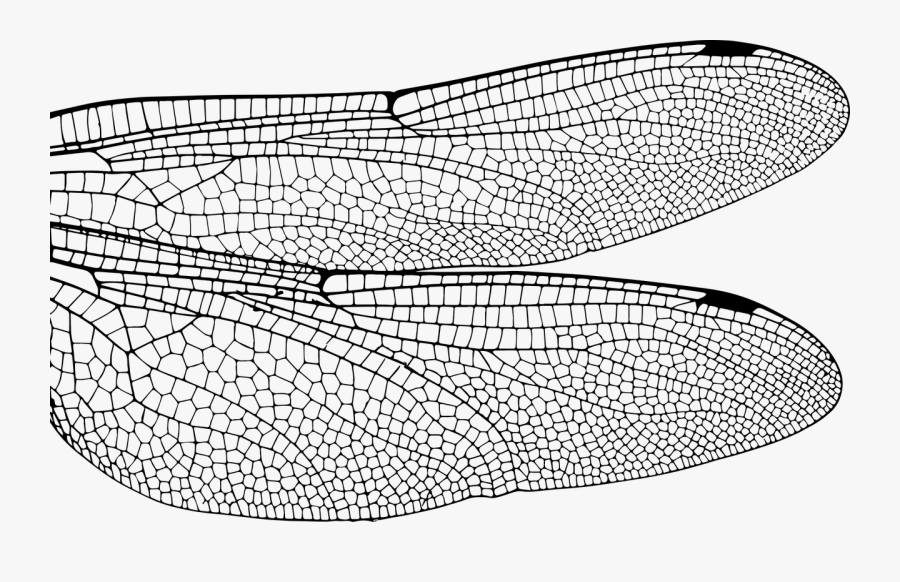 Transparent Fly Png - Close Up Dragonfly Wings, Transparent Clipart