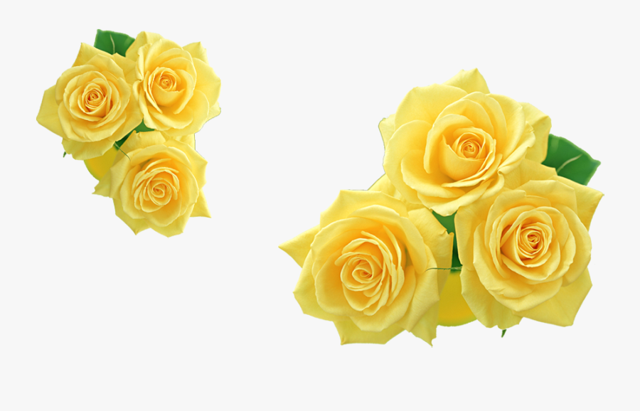 Rose Texas Yellow Cliparts Abeoncliparts Vectors Transparent - Yellow Rose  Clipart Free, HD Png Download - kindpng