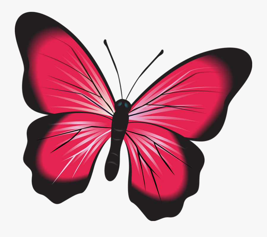 Butterfly, Pink, Clip Art, Insect, Nature, Natural, - Butterfly Fluturi, Transparent Clipart