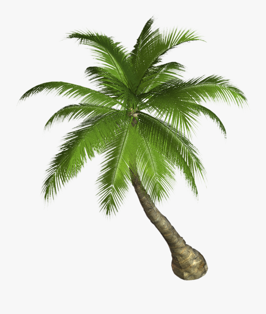 Palm Tree Sunset Clipart - Palm Tree Png Hd, Transparent Clipart