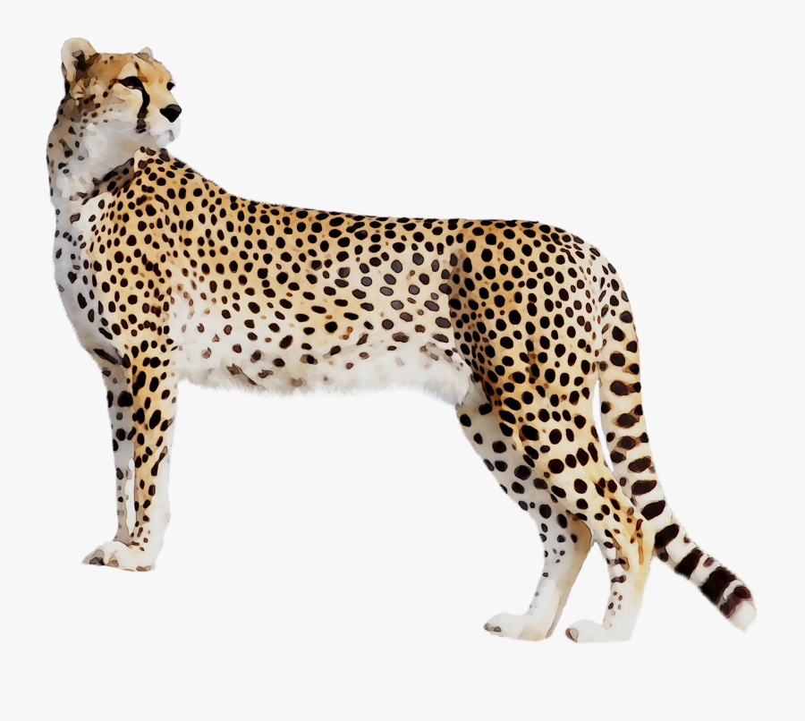 Panther Leopard Cat Tiger Black Cheetah Clipart - Cheetah Wallpaper Full Hd, Transparent Clipart