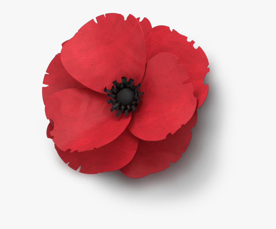 Poppy Flower Veterans Day Remembrance Poppy Png Free