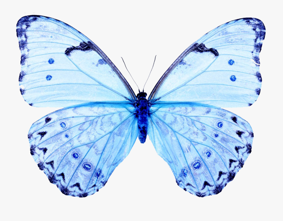 White Butterfly White Butterfly Papilio Ulysses T-three - Light Blue Butterfly Png, Transparent Clipart
