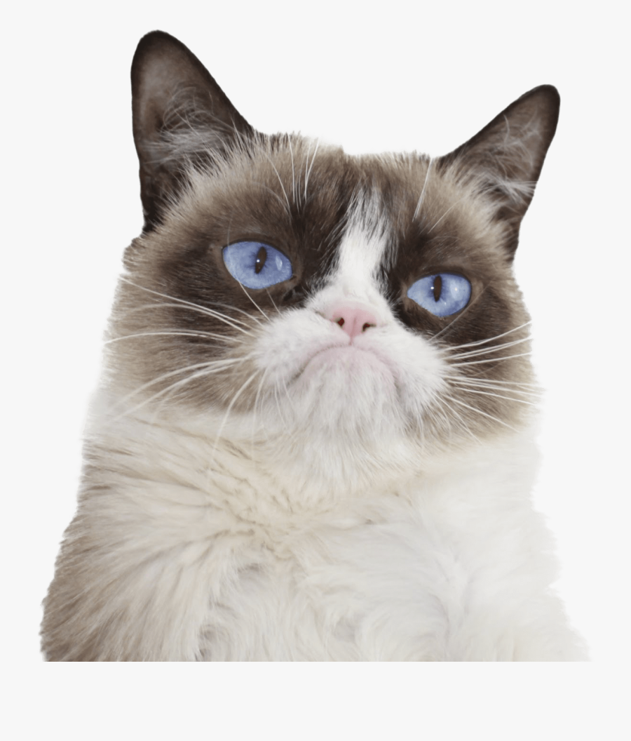 Grumpy Cat Blue Eyes - Grumpy Cat, Transparent Clipart