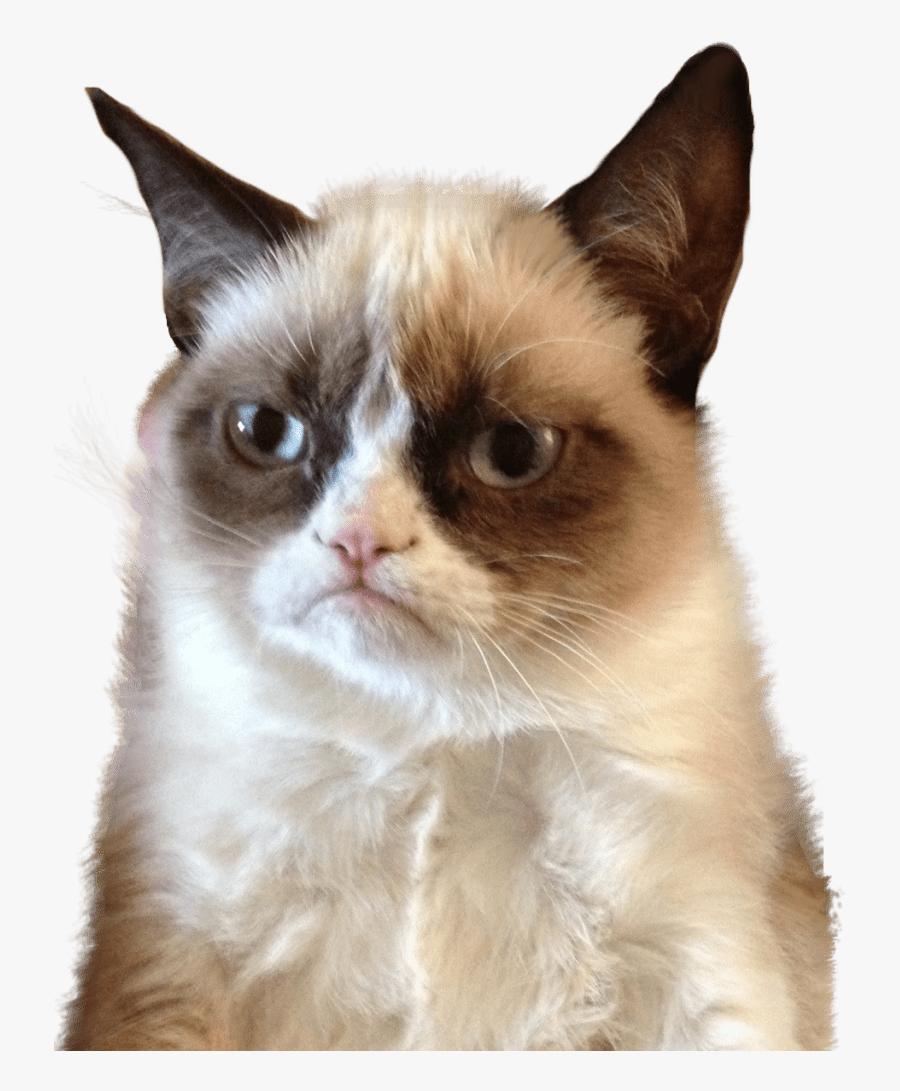 Grumpy Cat Upset - Let Me Think About It Meme, Transparent Clipart