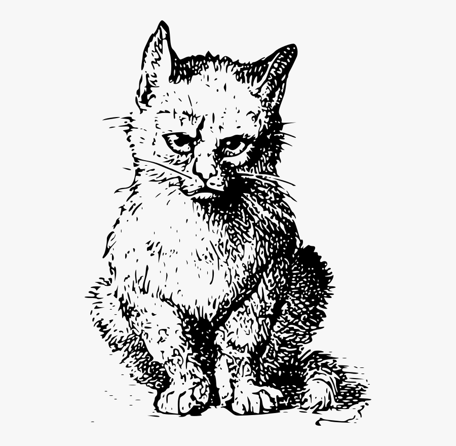 The Original Grumpy Cat - Shrödingers Cat, Transparent Clipart