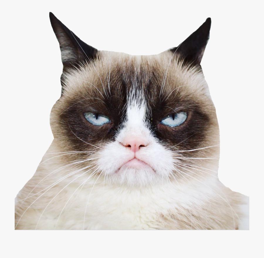 Official Grumpy Cat - Grumpy Cat, Transparent Clipart