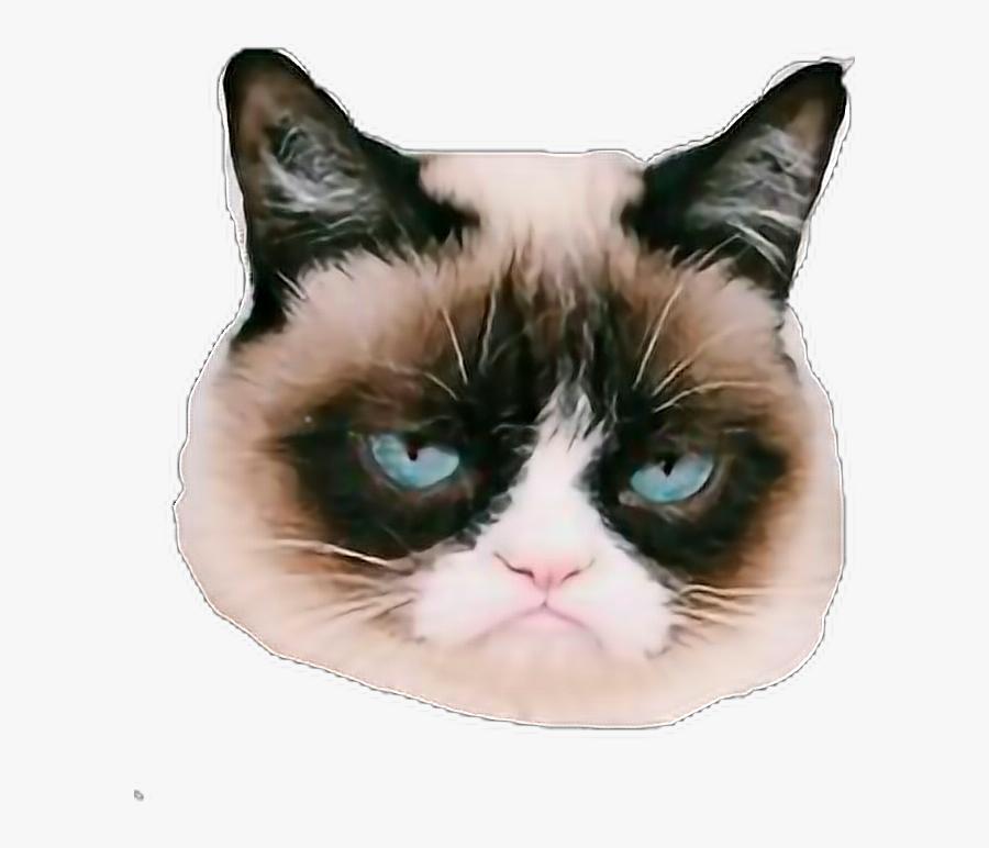 #grumpycat #grump #grumpy #cats #sticker - Grumpy Cat, Transparent Clipart