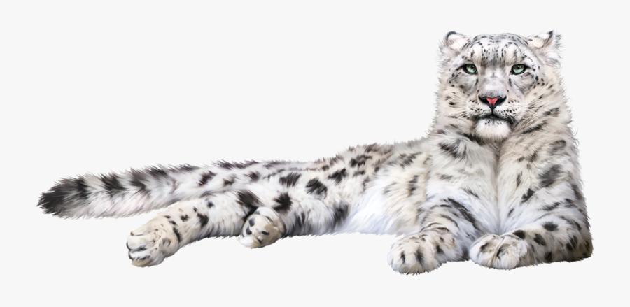 Snow Leopard Felidae Cat Whiskers - Snow Leopard Transparent Background, Transparent Clipart