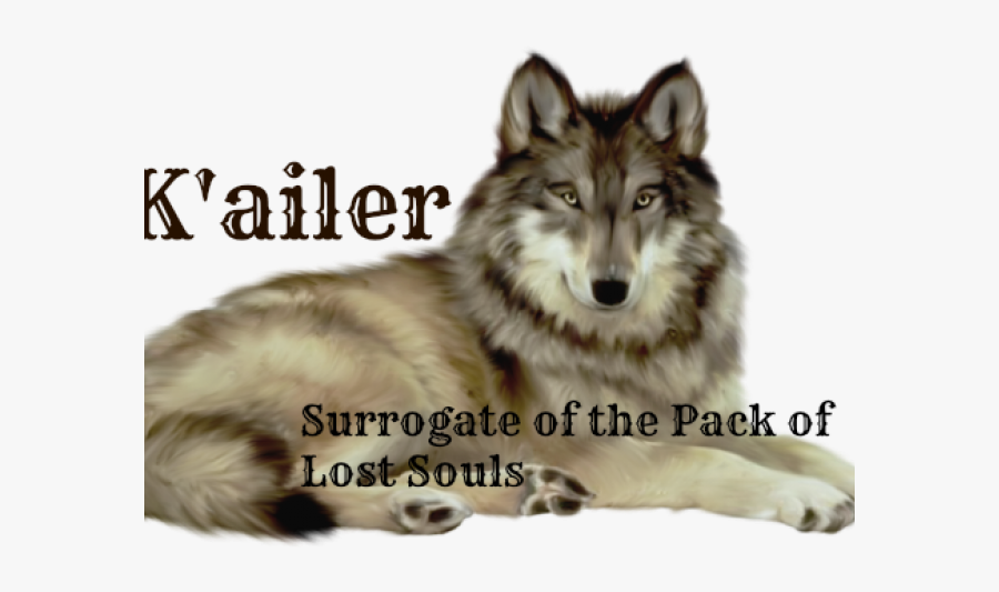 Wolf With White Background, Transparent Clipart