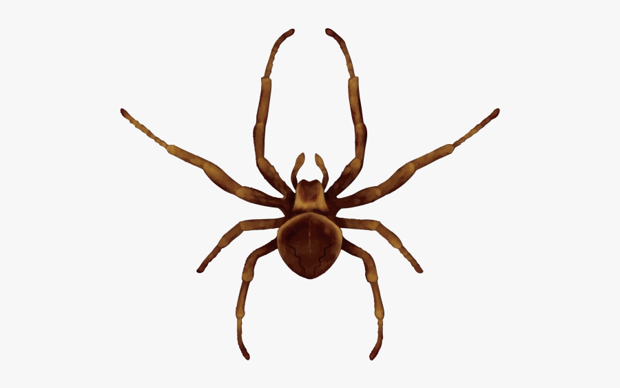 Spider Scary Clipart Insect Image And Transparent Png - Draw A Brown Recluse Spider, Transparent Clipart