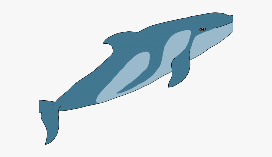 Bairds Beaked Whale Drawing, Transparent Clipart