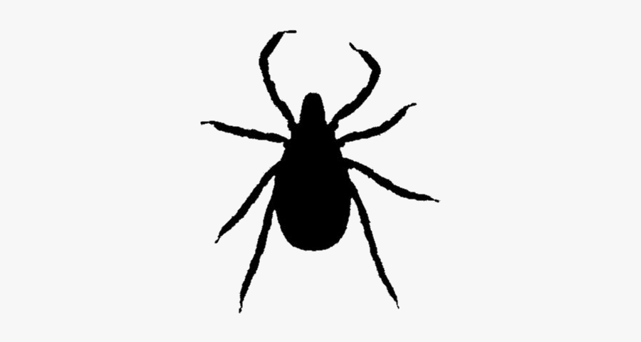 Black Ticks Insect Clipart Transparent Background - Weevil, Transparent Clipart
