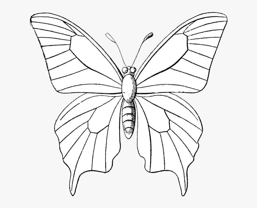 Insect Clipart Butterfly Coloring Page, Printable Insect - Outline Images Of Butterfly, Transparent Clipart