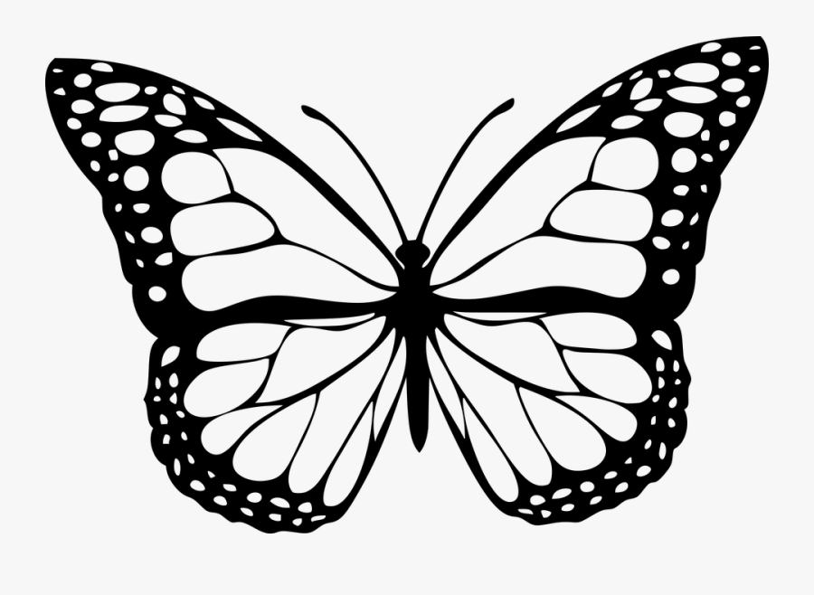 Transparent Clipart Flowers And Butterflies Black And - Butterfly Png Black And White, Transparent Clipart