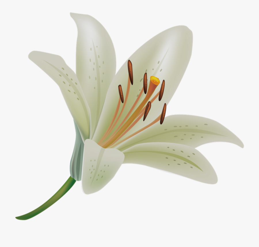 Fresh Collection Of Flower - Easter Lily With Transparent Background, Transparent Clipart