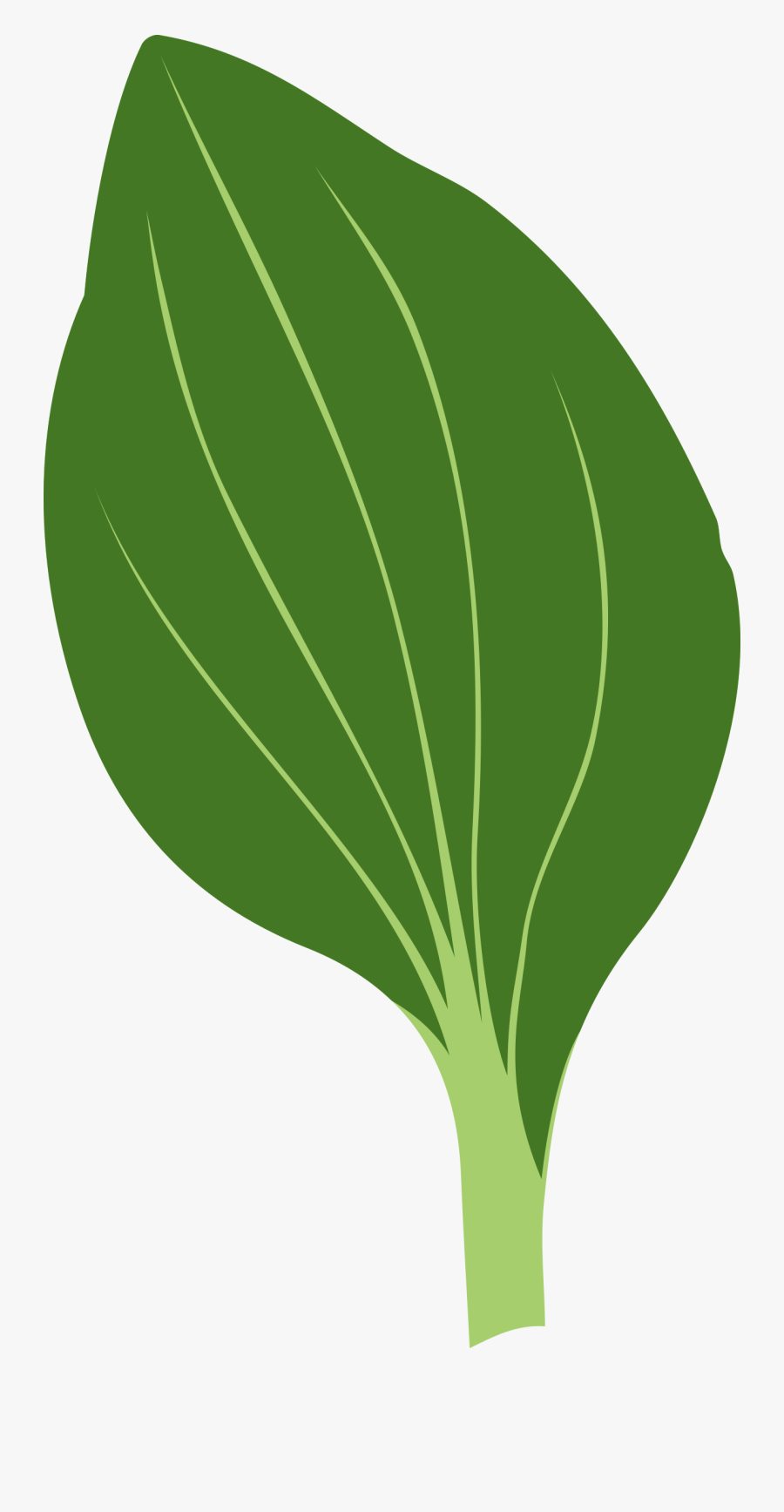 Plantago Clip Arts - Green Leaf To Draw, Transparent Clipart