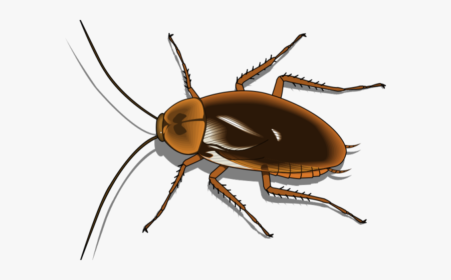 Cockroach Clipart Pest - Transparent Cockroach Vector Png, Transparent Clipart