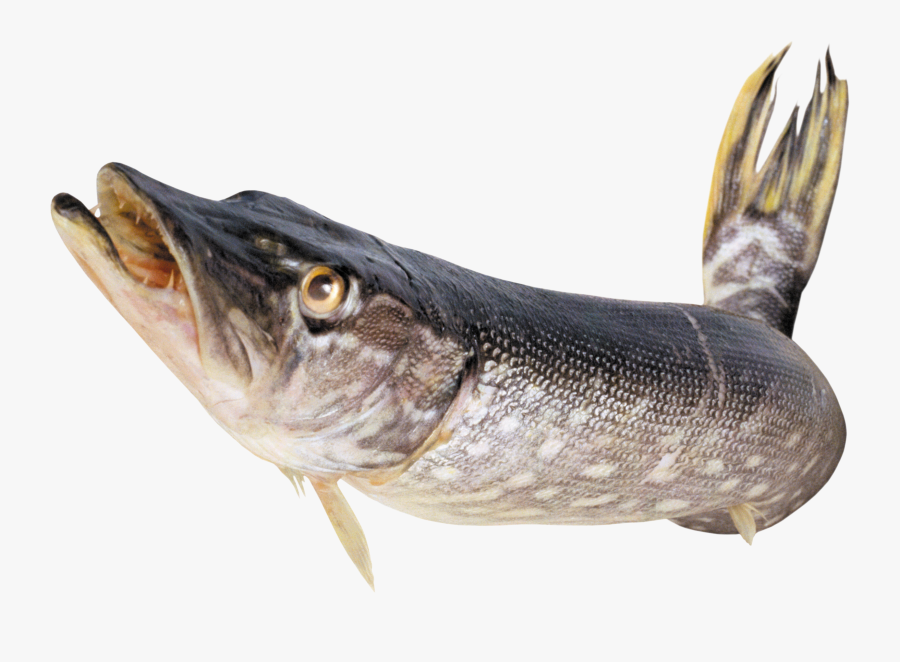 Поздравление С Днем Рождения Любителя Рыбалки, Transparent Clipart