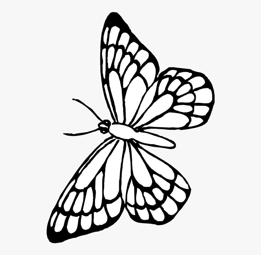 Transparent Butterfly Outline Clipart - Borboleta Desenho Para Pintar, Transparent Clipart