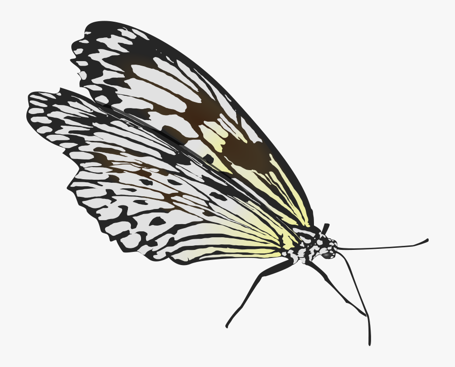 Butterfly - Fold Wings Butterfly, Transparent Clipart