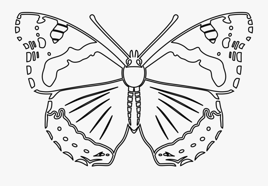 Transparent Butterfly Outline Clipart - Red Admiral Butterfly Outline, Transparent Clipart