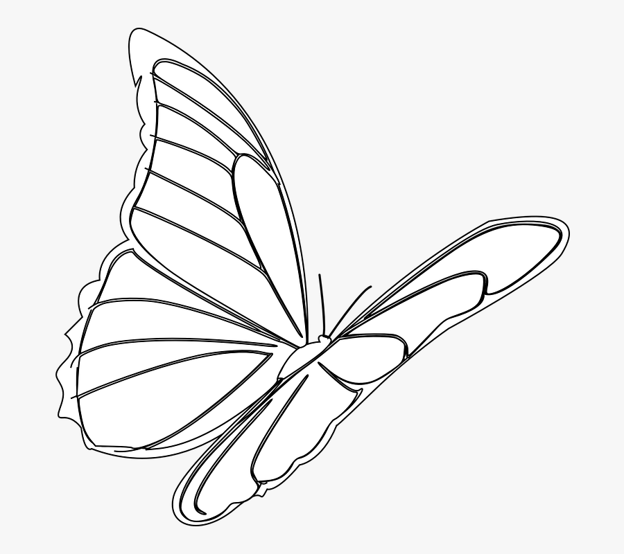 Butterfly, Flying, Insect, Monarch, Bug, Outline - Ảnh Vẽ Bướm Bay, Transparent Clipart