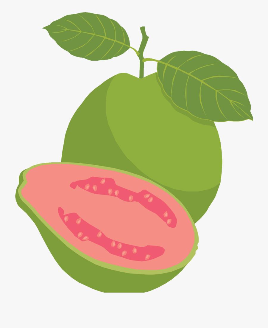 guava clipart png guava fruit clipart png free transparent clipart clipartkey guava clipart png guava fruit clipart