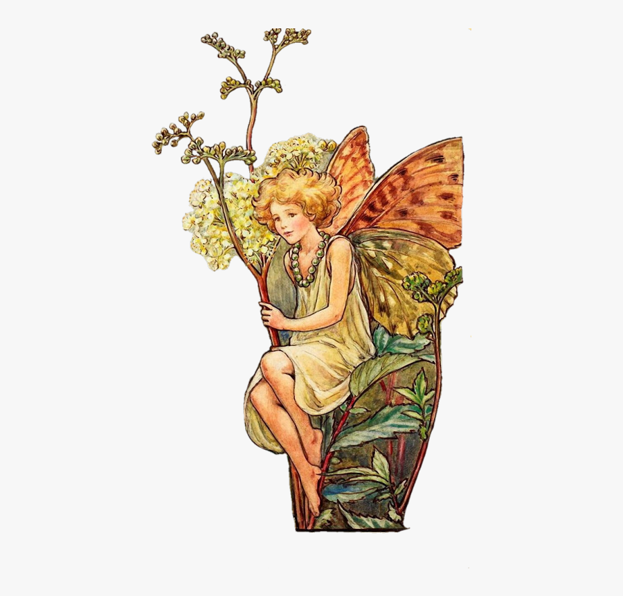 Vintage Fairy Pngs 🧚 - Flower Fairy Cicely Mary Barker Fairies, Transparent Clipart