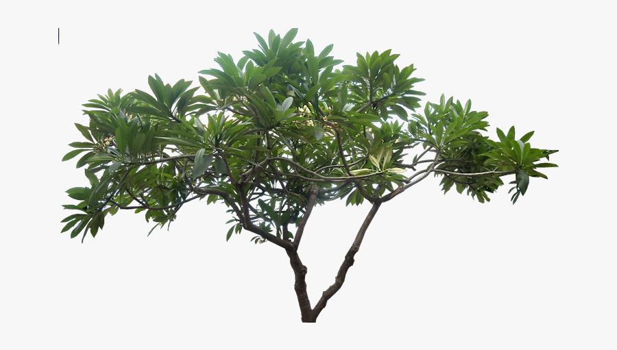 Transparent Vaporwave Palm Tree Png High Resolution Tree Png Free Transparent Clipart Clipartkey