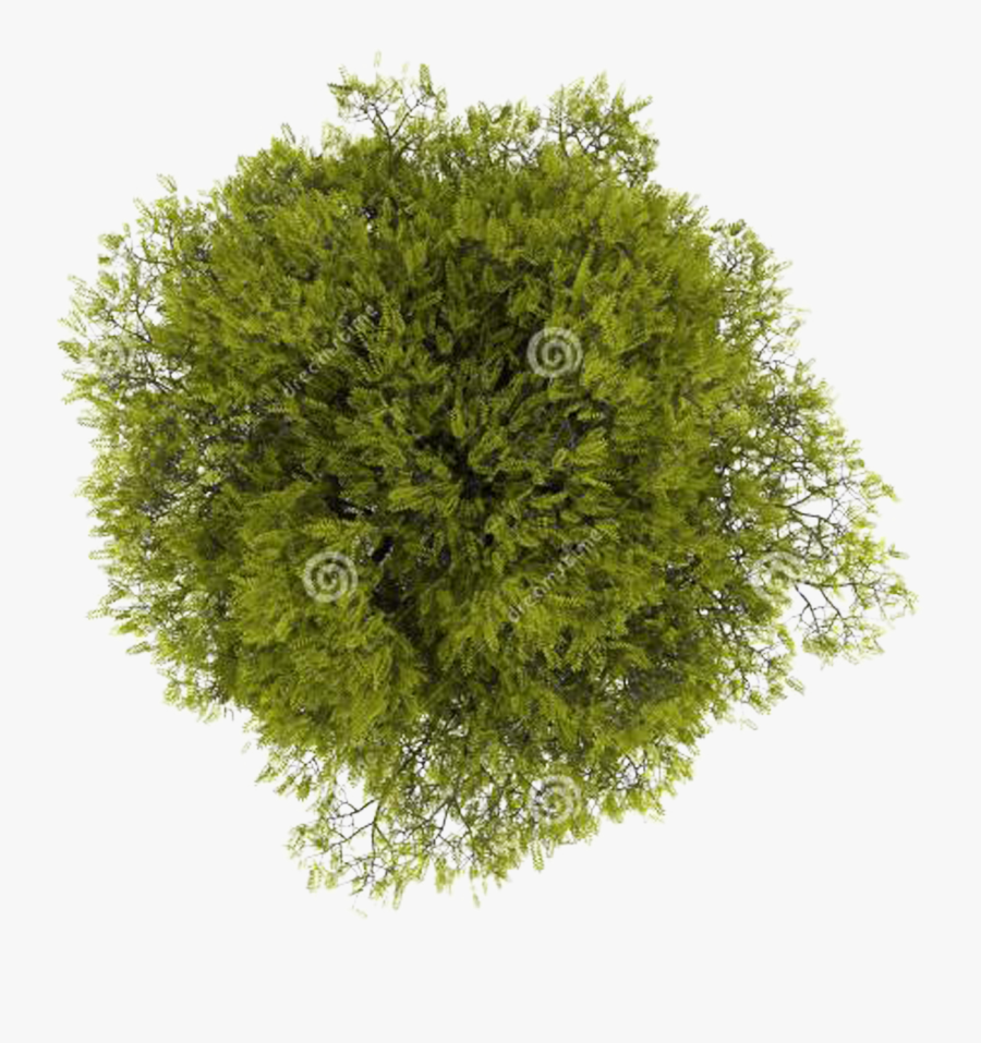 Top Computer Tree File View Free Download Png Hd Clipart - Transparent Background Top View Tree Png, Transparent Clipart