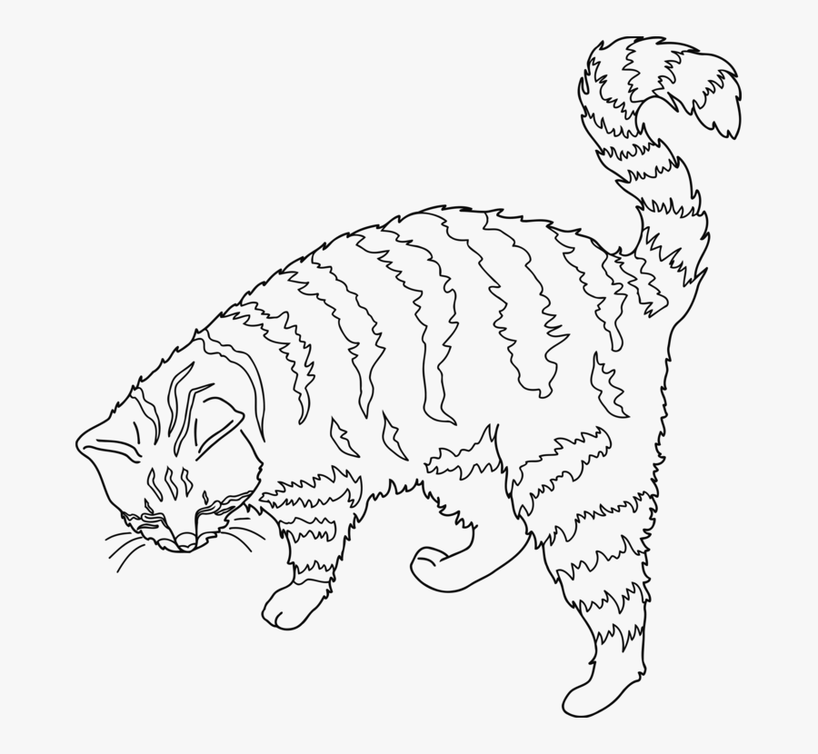Wild Cat,carnivoran,dog Like Mammal - Persian Cat Outline Transparent, Transparent Clipart