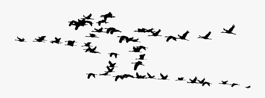 Wildlife,bird Migration,silhouette - Flock Of Cranes Silhouette, Transparent Clipart