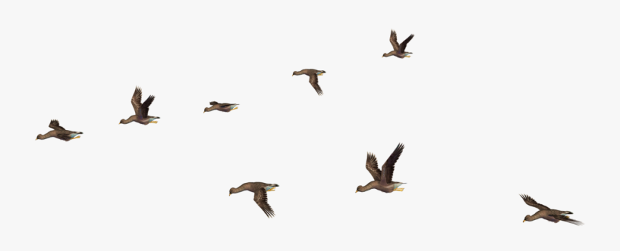 Flying Bird Png Clipart Png Download Flying Bird Gif Png Free Transparent Clipart Clipartkey