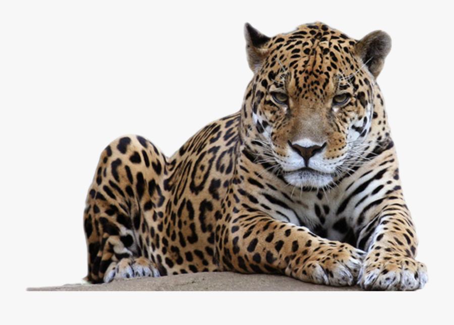 Transparent Leopard Spots Png - Leopard Png, Transparent Clipart