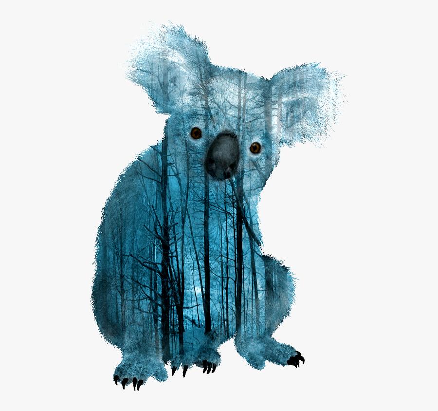 Transparent Koalas Clipart - Transparent Koala With White Background, Transparent Clipart