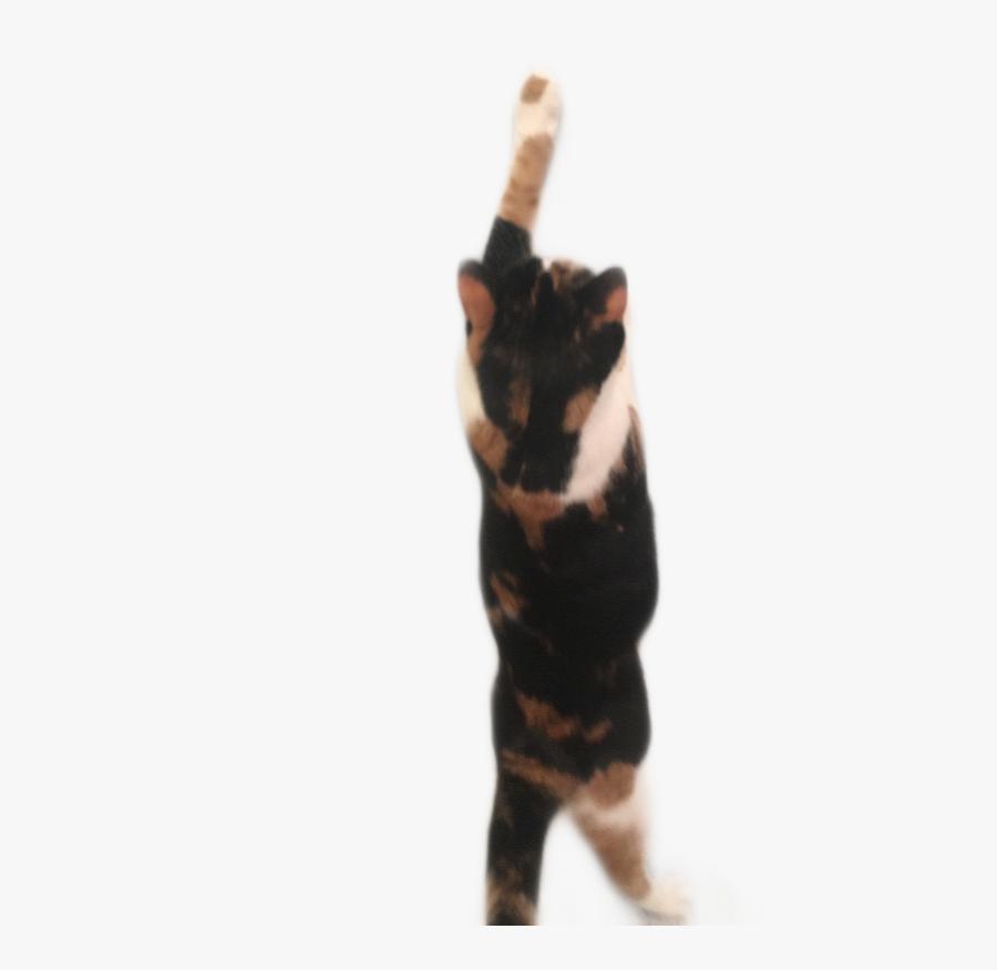 Cat Kitten Blackcat Calico Calicocat Freetoedit - Domestic Short-haired Cat, Transparent Clipart